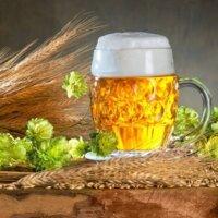 kufel piwa otoczony kłosami jęczmienia i szyszkami chmielu