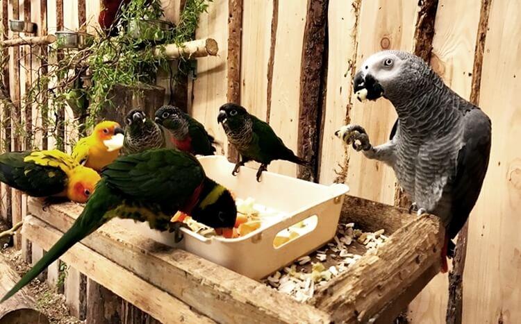 różne gatunki papug