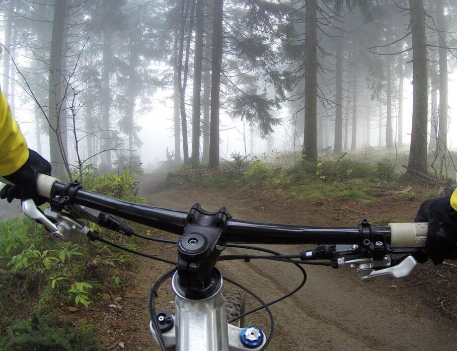 rower natrasie leśnej
